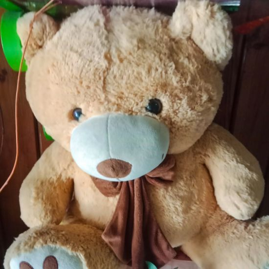 Brown Teddy bear Ahmedabad