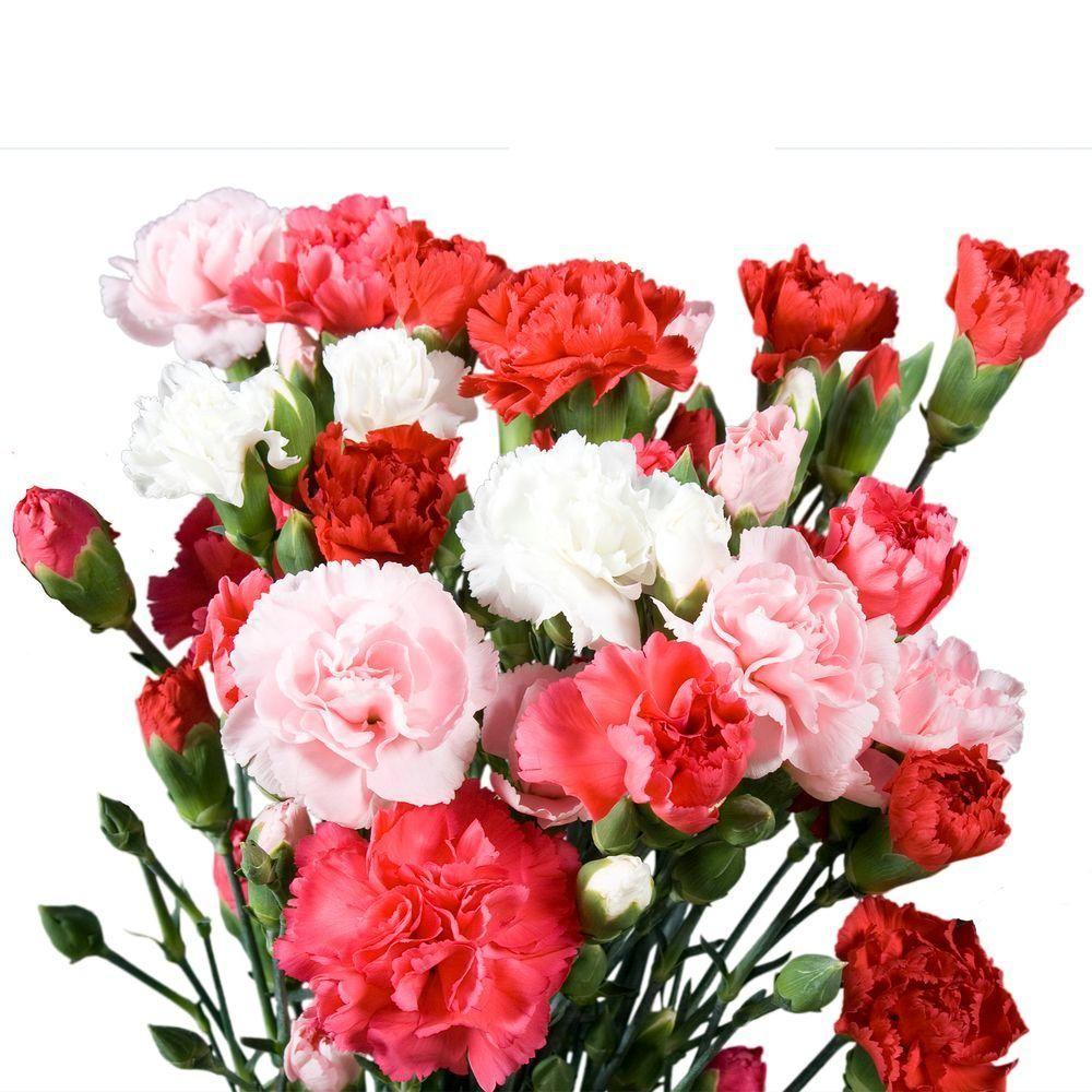 Beautiful Carnations To Ahmedabad Same Day Delivery Gift